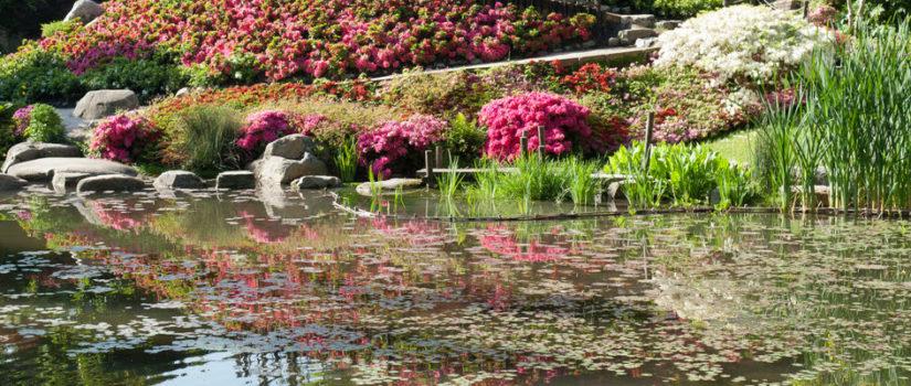 Reouverture Des Jardins Du Musee Albert Kahn Mardi 16 Juin 2020